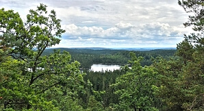 Naturarvet skog