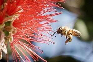 Rädda bin i Etiopien